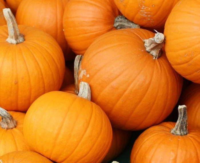 26th Oct: Pumpkin Trail & Treats, Pumpkin Disco, Knebworth
