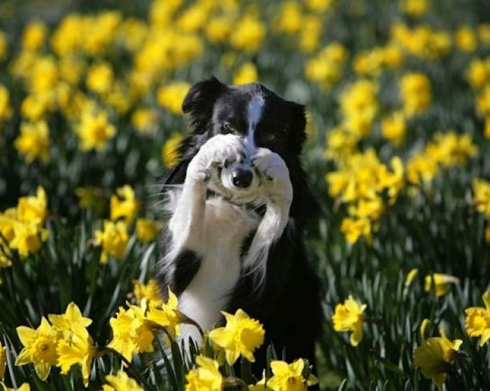 26th March: Dogs & Daffs Charity Walk, Hatfield House